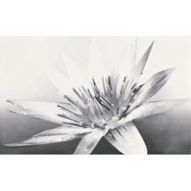 INSERTO NEGRA WHITE FLOWER 25X40 GAT. 1