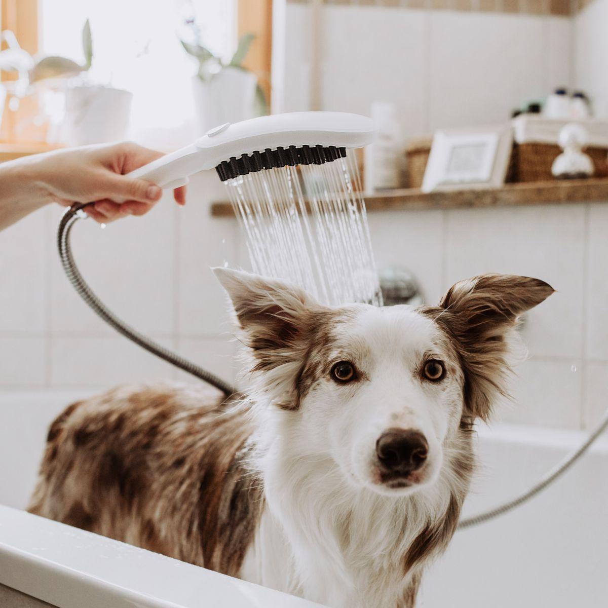 Prysznic dla psa, czyli DogShower od hansgrohe